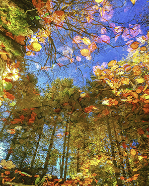 Autumn Reflecting in Jamestown Woods