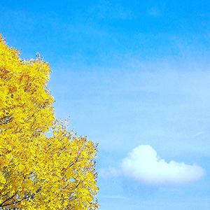 Autumn Ash