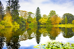 Autumn Reflecting In Curraghmore Gardens