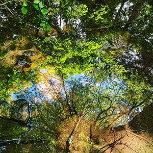 Summer woodlands reflecting