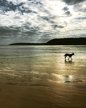 Rolo on Woodstown beach, Co Waterford