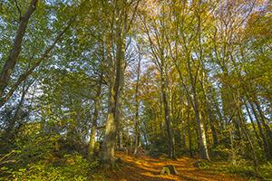Autumn light & leaves, Jamestown Woods