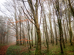 Dancing Tree in Mist