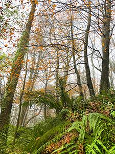 Autumn colours in Jamestown Woods